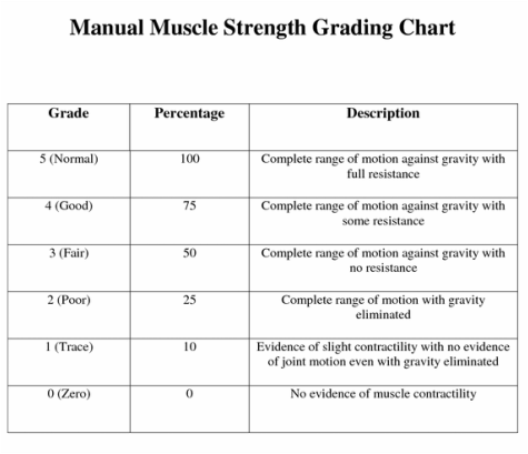 manual muscle testing grades kendall